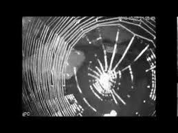 Spider on CCTV camera